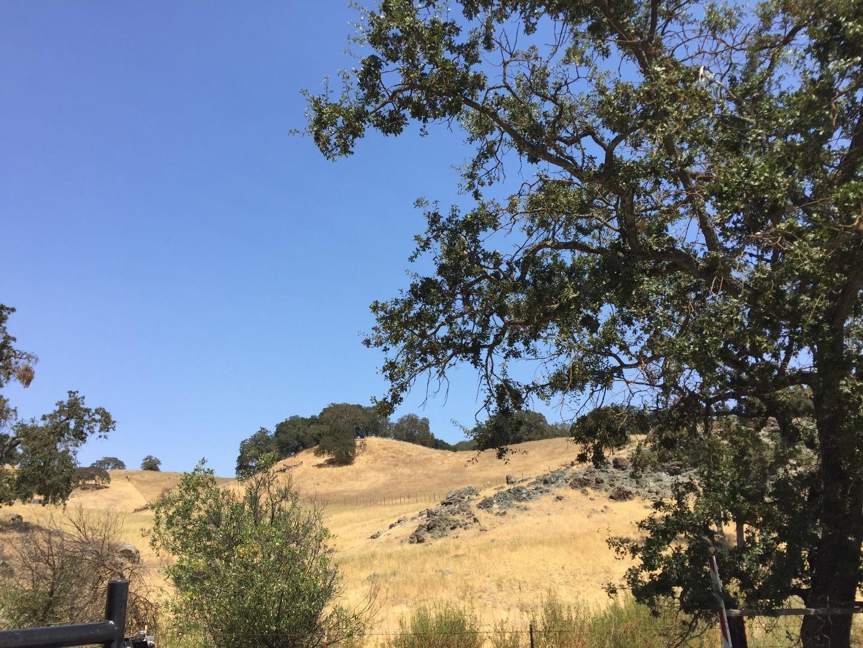 土地 のために 売買 アット 1 Little Uvas Road 1 Little Uvas Road Morgan Hill, カリフォルニア 95037 アメリカ合衆国