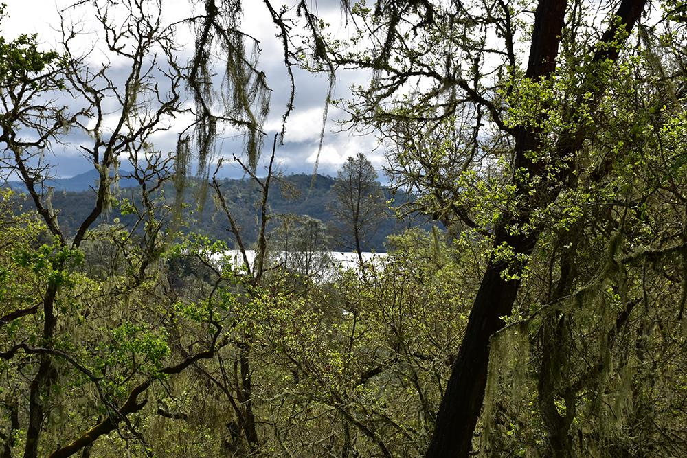2658 Pine Ridge Road, BRADLEY, CA 93426