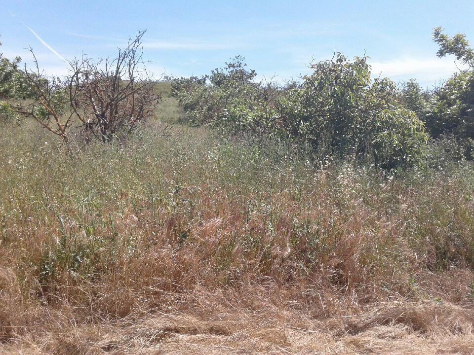 Additional photo for property listing at San Juan Hollister  Hollister, Californie 95023 États-Unis