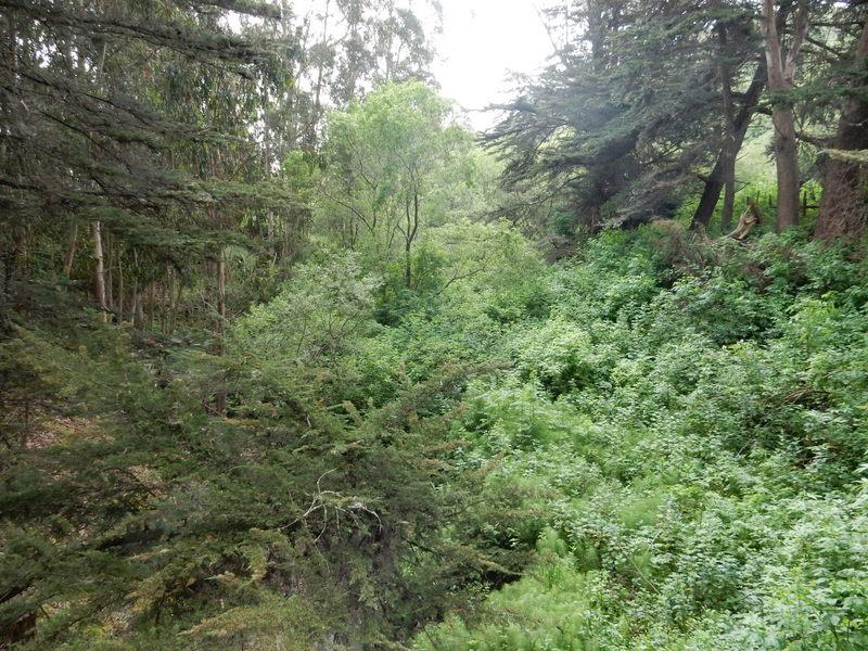 Additional photo for property listing at 6090 Stage Road  San Gregorio, カリフォルニア 94074 アメリカ合衆国