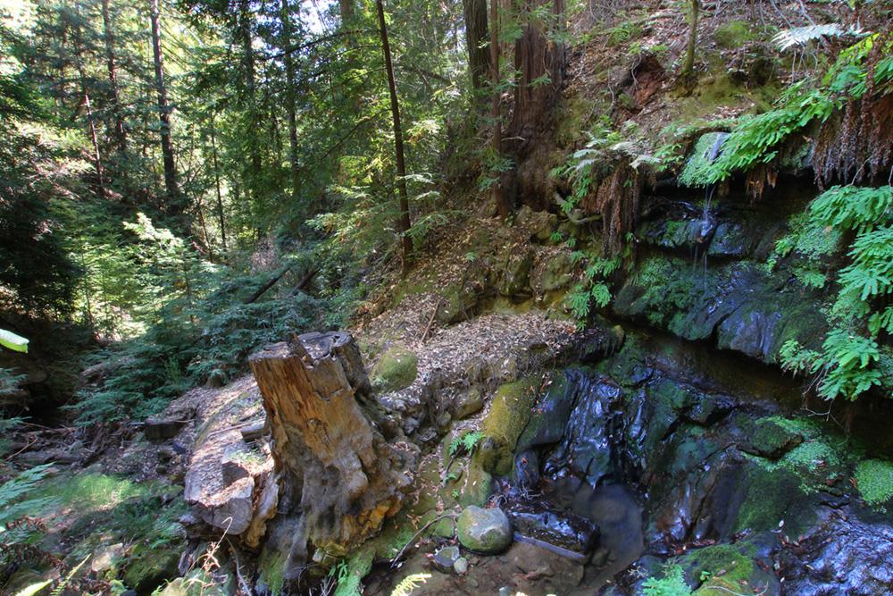 Additional photo for property listing at 19515 Big Basin Way  Boulder Creek, カリフォルニア 95006 アメリカ合衆国