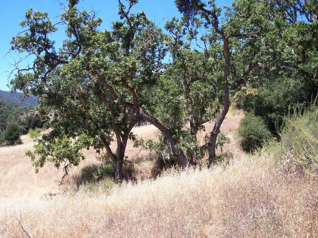 Additional photo for property listing at Cachagua Road  Carmel Valley, California 93924 Estados Unidos