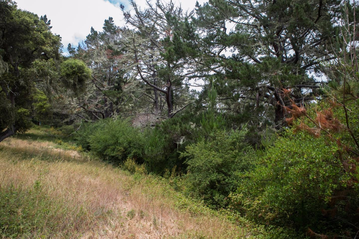 Additional photo for property listing at 8, 10 & 12 Rancho San Carlos Road  Carmel, カリフォルニア 93923 アメリカ合衆国