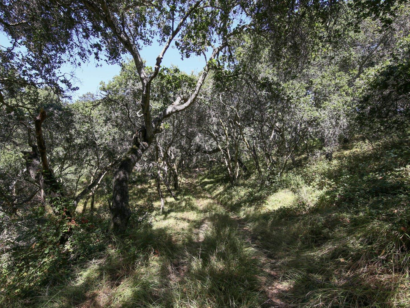 Land for Sale at 45 Crazy Horse Canyon Road Prunedale, California 93907 United States