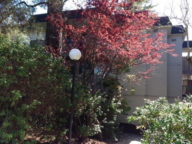 Eigentumswohnung für Mieten beim 1233 Shelter Creek Lane 1233 Shelter Creek Lane San Bruno, Kalifornien 94066 Vereinigte Staaten