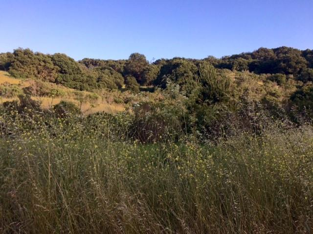 Land for Sale at 210 Chateau Drive Aromas, California 95004 United States