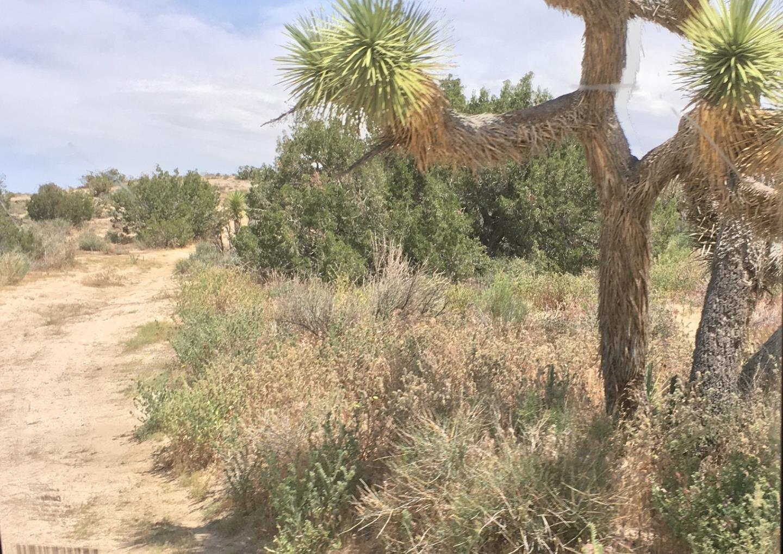 Terrain pour l Vente à Mt Emma/85th Ste Mt Emma/85th Ste Palmdale, Californie 93550 États-Unis