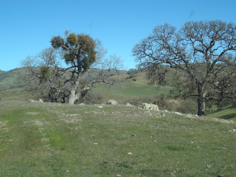 Земля для того Продажа на 20391 Panoche Road 20391 Panoche Road Paicines, Калифорния 95043 Соединенные Штаты