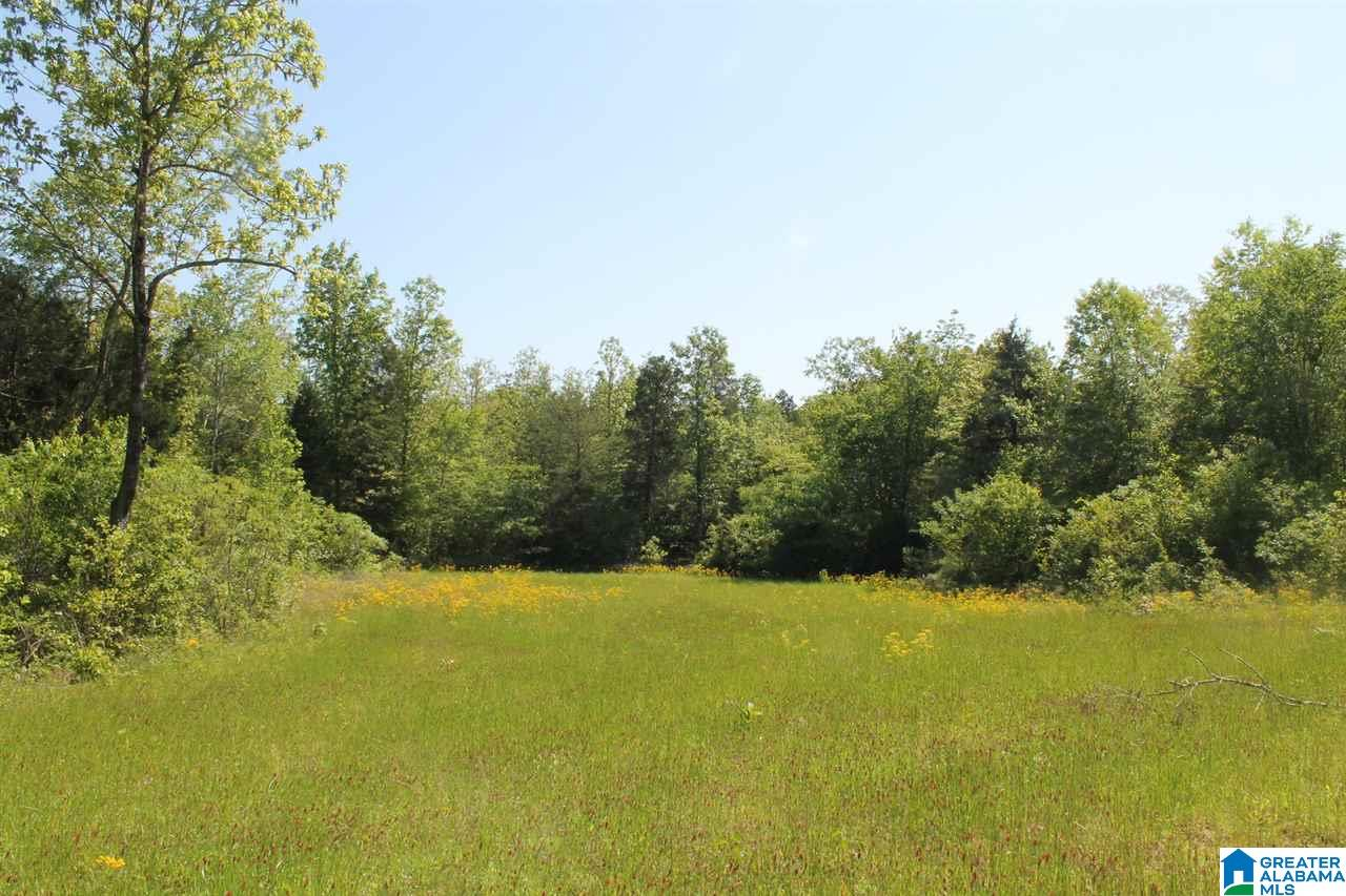 00 CO RD 4 22 acres, DOUBLE SPRINGS, AL 35553