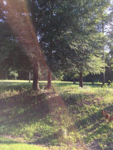 0 Pandion Drive, Magnolia Springs, AL 36555