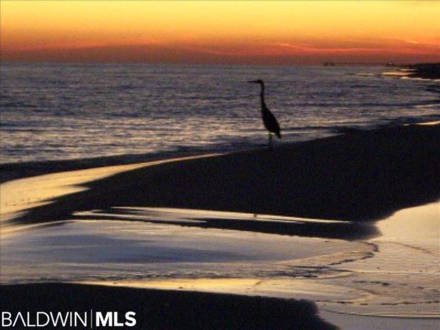 24568 Perdido Beach Blvd #507, Orange Beach, AL 36561