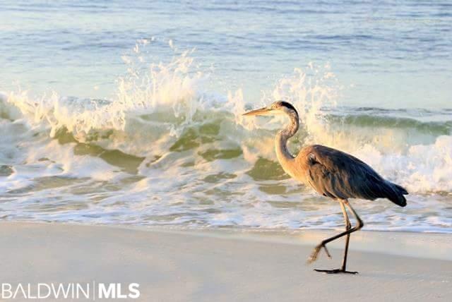 27284 Perdido Beach Blvd #301E, Orange Beach, AL 36561