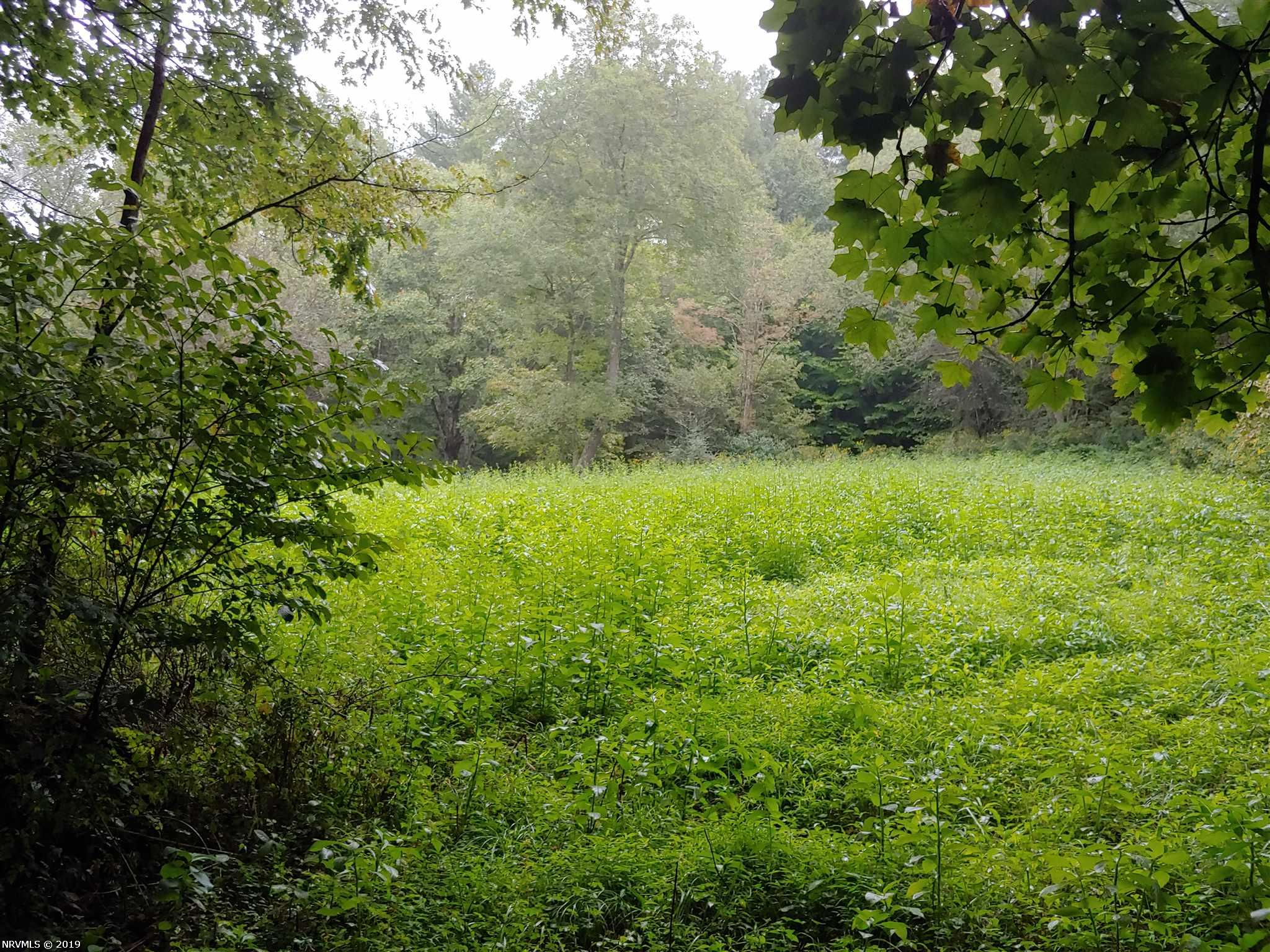 Recreational Property with an abundance of wildlife! A national forest with horse trails is within 2-3 miles of this location. Would be a great secluded home site as well. Build your dream country home here in the mountains of Grayson County!