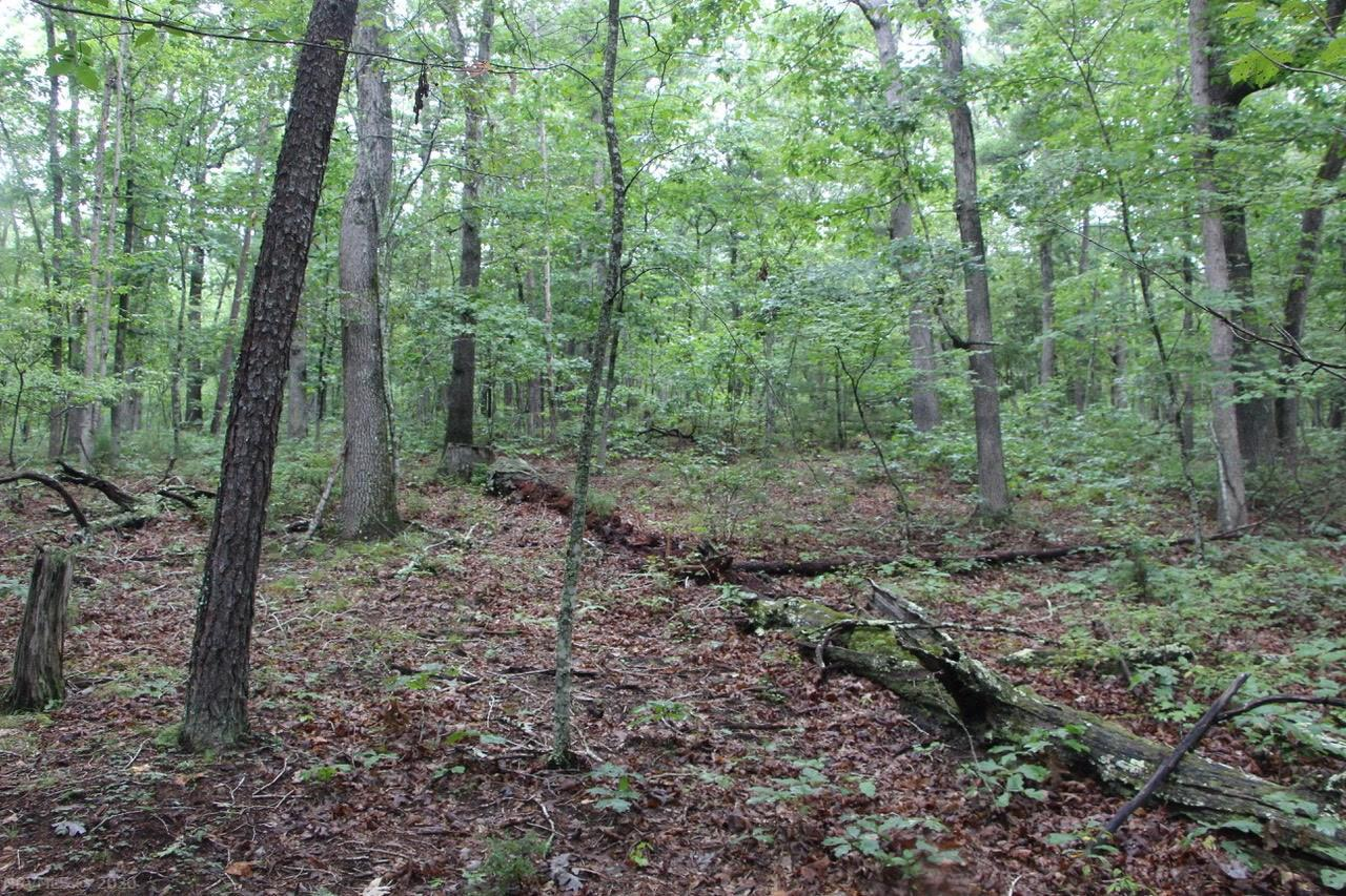 A great opportunity to purchase your own private, wooded retreat with nearly 50 acres of land nestled in the Blue Ridge Mountains! Conveniently located to Salem, Roanoke, Blacksburg, VT, Christiansburg, Radford, RU and only minutes to I-81. Very affordable property to build your dream home on. Lots of wildlife for the huntsman; very private and peaceful. Must see! Second lot with another 35.964 acres is available to be purchased from the same owner. Offered for $199,900 if lots are purchased together.
