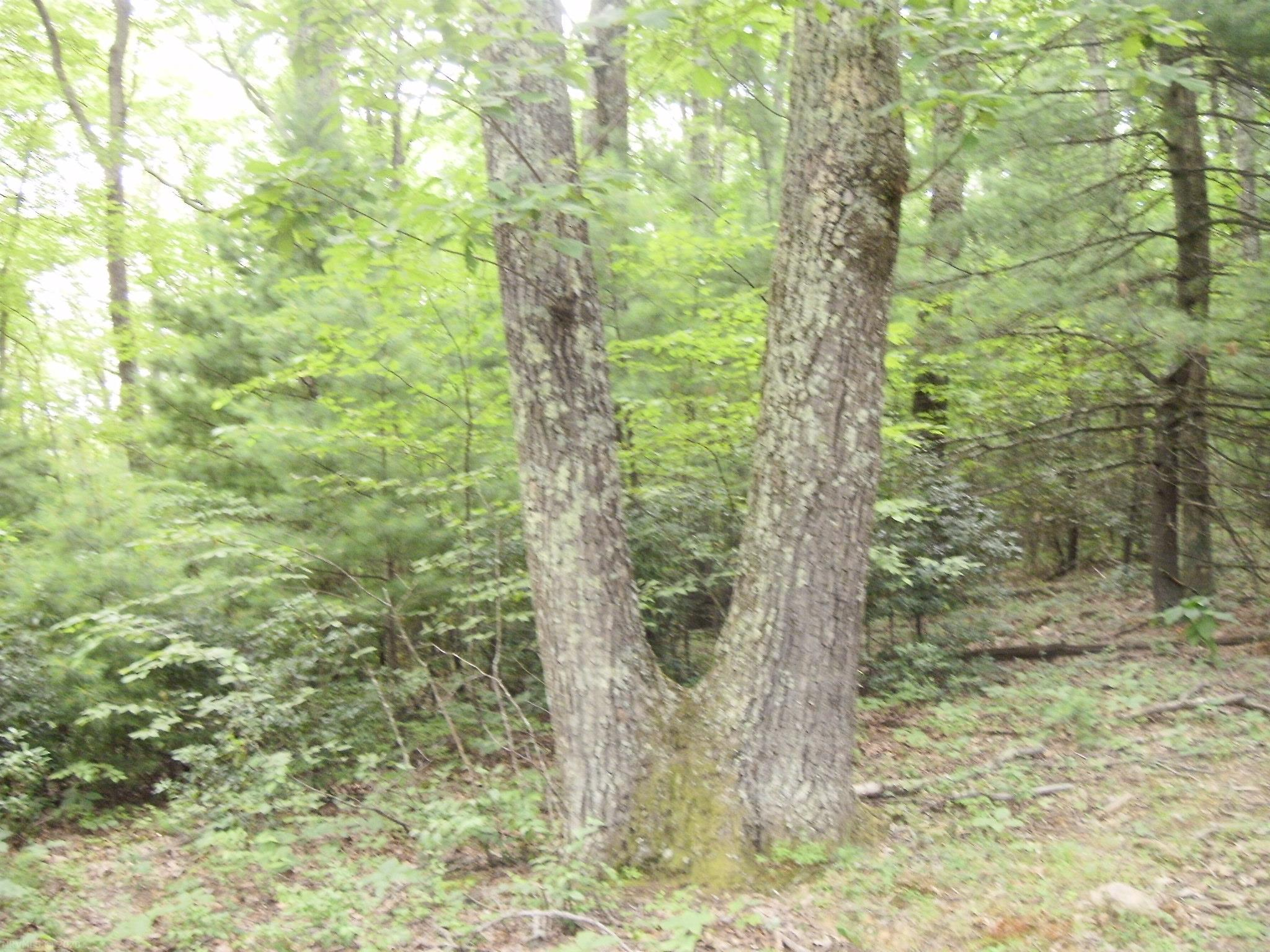 Enjoy privacy and country living close to town. Just 2 minutes from the Blue Ridge Parkway!  Less than 15 minutes to the town of Floyd.  2.46 acres of mostly level wooded land.  This parcel has been previously evaluated for septic and is clearly marked.  Beautiful mature hardwood trees, Rhododendrons, and Mountain Laurels make this property a great choice for your home or rural Floyd retreat.