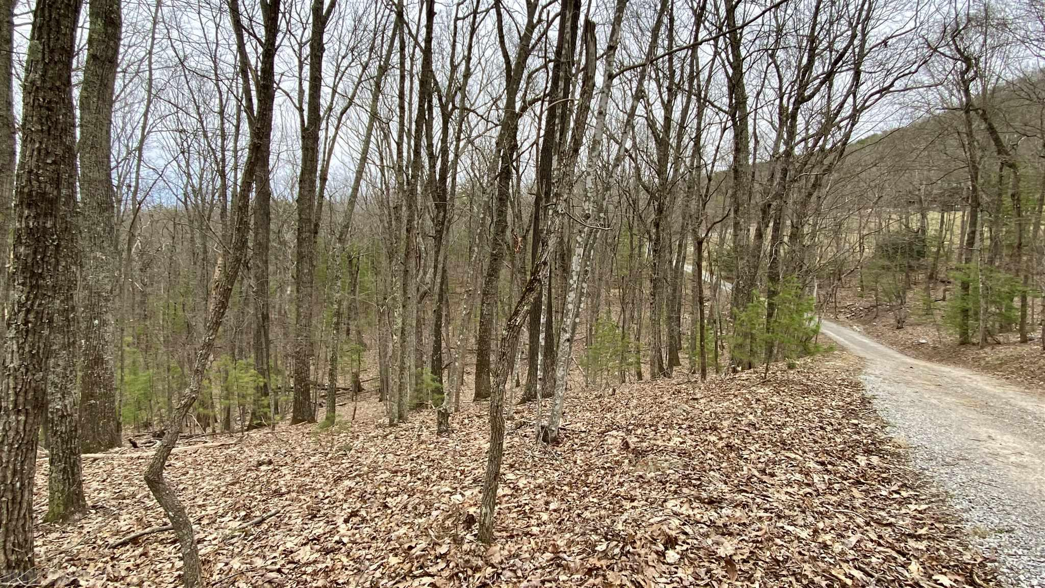 A 10-acre wooded paradise at the end of a private road awaits you and your house plans. Live in the serenity of the mountains while being within 8-10 minutes of Wytheville and Fort Chiswell. If you are looking for remoteness with convenience to amenities this property could be the fit you are looking for. Perfect tract for that log cabin you've always wanted to build. Plenty of room to hike, ride, and explore. Check out the photos and schedule your appointment today.