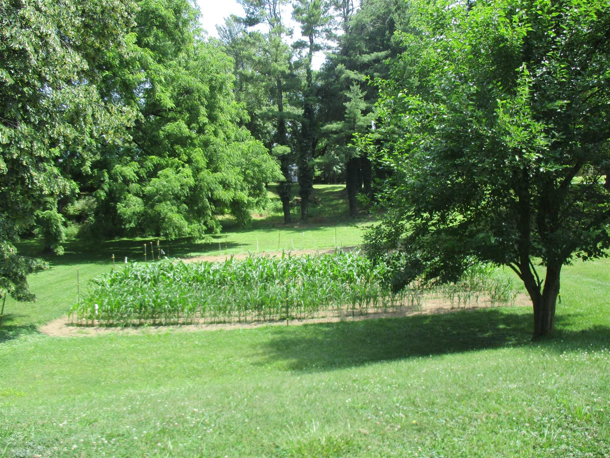Great opportunity to build your dream home in Plan A on a nice corner shaded lot with mature trees.  Adjoining property available see MLS 412410.