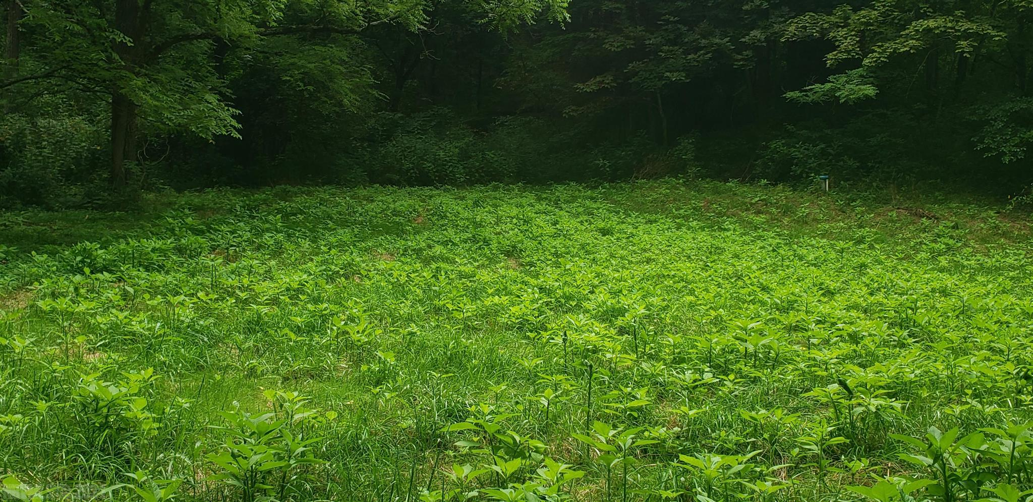 nice country lot located 10 mins from Claytor Lake State park and 10 Minutes from Radford University