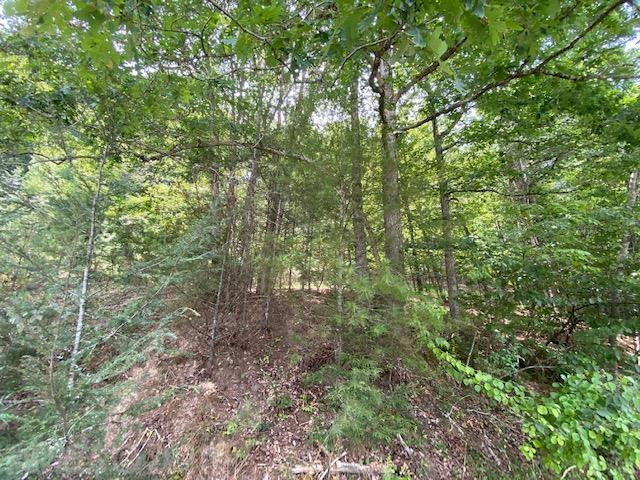 This Larger Wooded Land Tract has been a Hunters Paradise.  Several Potential Building Sites on Top of this Land.  Views on the Top Overlook the Historic Town of Pulaski.  Enjoy Nature and the Serenity along with YOUR Privacy Too.  This is a Truly a Special Mountain Property and is Located in Pulaski County.